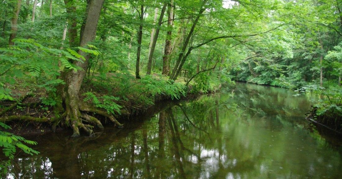 Трикратський ліс